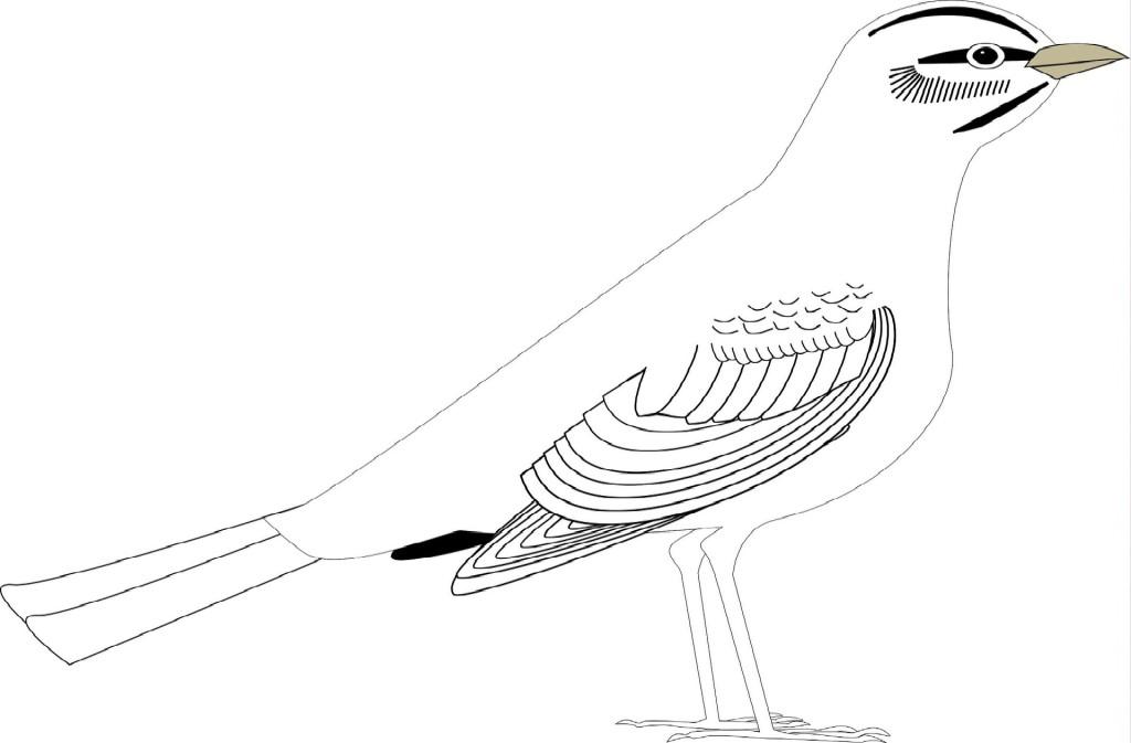 bird-169283_1920