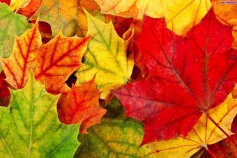 Jakie znaczenie mają kolory jesieni? Sprawdź! :)